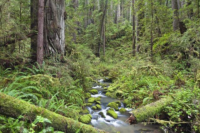 potok v lese.jpg